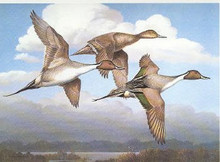 Arkansas Duck Stamp Print 1988 Pintails by Maynard Reece Executive Edition