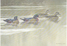 Arkansas Duck Stamp Print 1987 Wood Ducks by Robert Bateman W / 2 Stamps