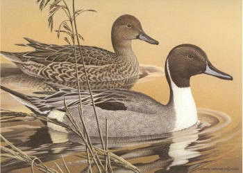 Arkansas Duck Stamp Print 1984 Pintails by Larry Hayden Executive Edition