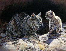 The Lesson - Bobcat by Terry Isaac 12