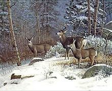 Meeker Mountain Mulies by Scott Zoellick