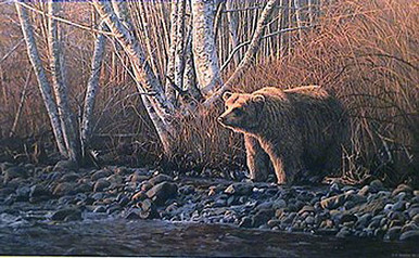 Autumn Morning - Grizzly by Ron Parker