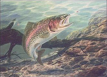 Over the Rainbow-Trout by Randy McGovern