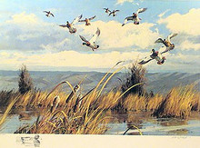 Opening Day Mallards California -