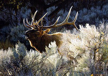 Indian Summer - Bugling Elk giclee Canvas by Carl Brenders