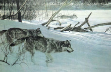 Wolf Pack In Moonlight Canvas Artist Proof - LIMITED EDITION PRINT by Robert Bateman 36 x 24
