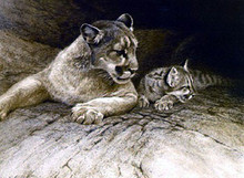 Cougar and Kit - Lithograph by Robert Bateman