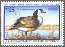 Federal Duck Stamp RW64 ( 1997 Canada Goose )