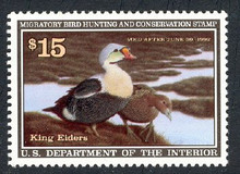 Federal Duck Stamp RW58 ( 1991 King Eider )