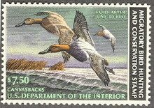 Federal Duck Stamp RW49 ( 1982 Canvasbacks )
