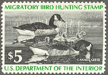 Federal Duck Stamp RW43 ( 1976 Canada Geese )