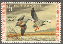 Federal Duck Stamp RW39 ( 1972 Emperor Geese )