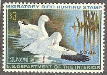 Federal Duck Stamp RW37 ( 1970 Ross' Geese )