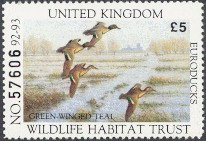 United Kingdom Duck Stamp 1992 European Green - Winged Teal