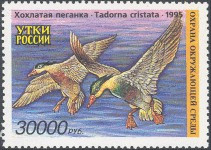 Russia Duck Stamp 1995 Crested Sheld Ducks