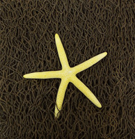 Decorative Net 3' x 5' • Dyed Finger Starfish