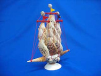 Tiger Cowrie Sailboat • 10""