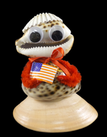 Mr. USA • Tiger Cowrie