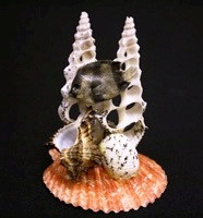 Pecten Noblis Fish Novelty