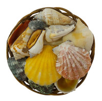 "Seashells 4"" Basket"
