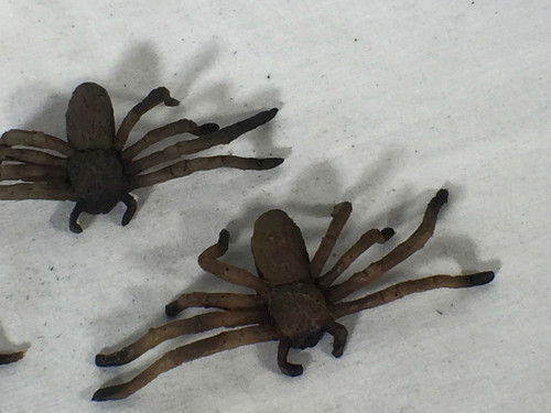 Arachnophobia Real Prop Spider  Screen Used Excellent Condition