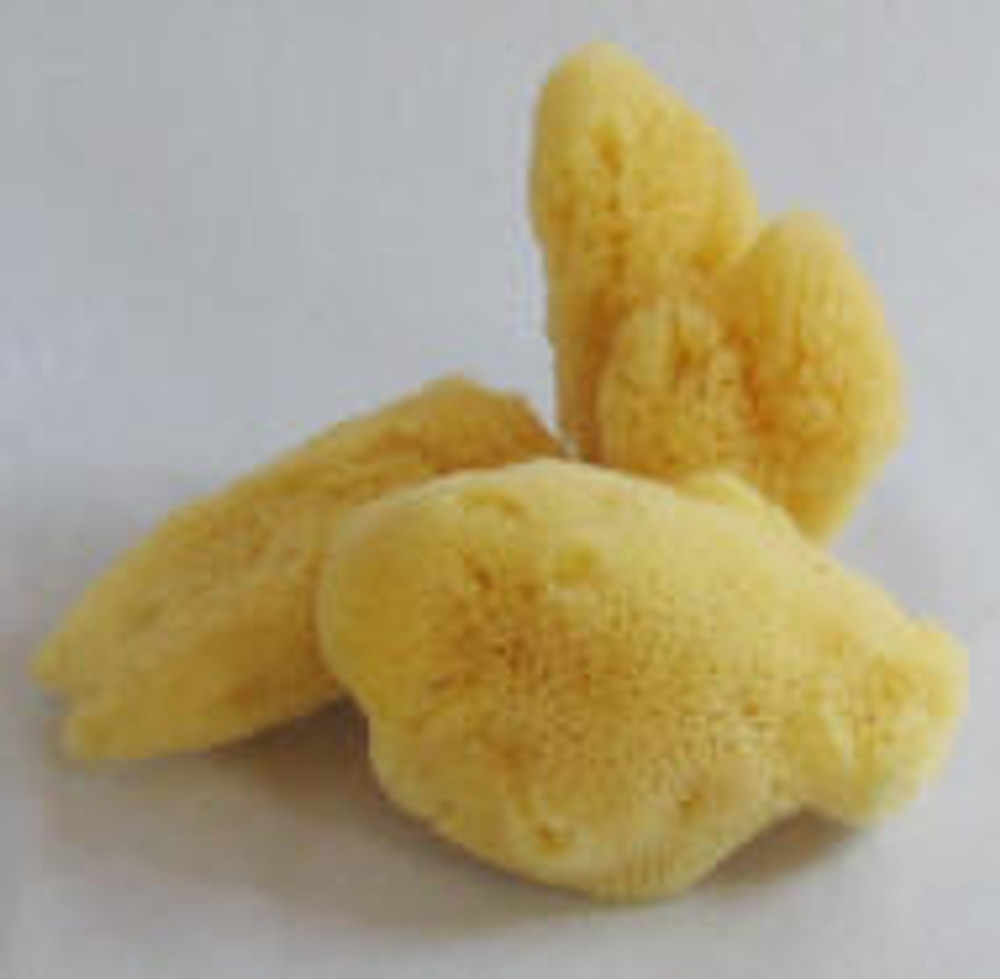 Atlantic Silk Facial Sponge