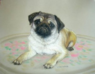 Pug Dog Original Pastel Drawing by Sally Porter