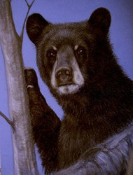 Black Bear Original Pastel Drawing by the Porter Family