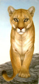 Mountain Lion Original Pastel Drawing by the Porter Family