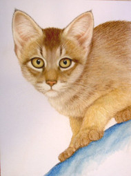 Original Pastel Drawing Golden Abyssinian Cat