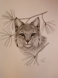Original Charcoal Drawing Bobcat with Pine