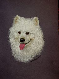Original Pastel Drawing White Samoyed Dog
