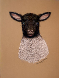 Original Pastel Drawing Black-Faced Lamb
