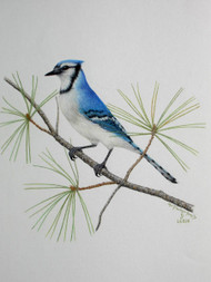 Original Pastel Drawing Bluejay