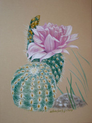 Original Pastel Drawing Barrel Cactus flower