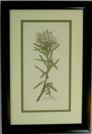 Marsh Tea Framed Colored Pencil Drawing by Larry Peterson