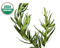 Australian Tea Tree Oil (ORGANIC)
