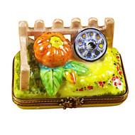 Pumpkin Field Rochard Limoges Box