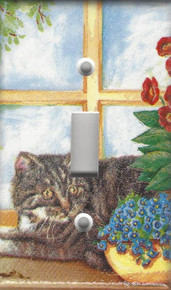 Silver/Grey Tabby Cat Sunning in the Window
