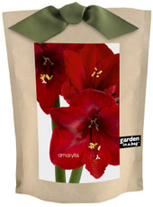 Garden-in-a-bag Amaryllis Red