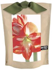 Garden-in-a-bag Amaryllis Candycane