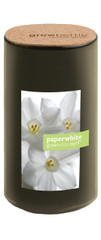 Grow Bottle Demi Paperwhites