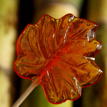 Maple Syrup Maple Leaf Lollipop