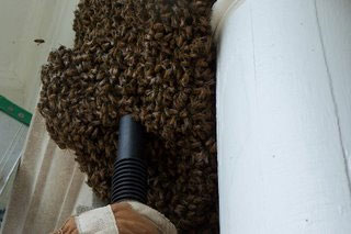 Swarm on porch