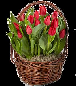 กระเช้าดอกไม้ B13