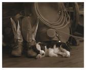 Cowboy Puppy by Robert Dawson