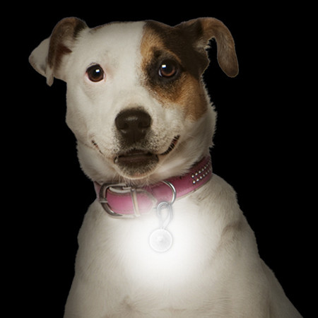Best pet collar light and free shipping.