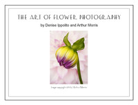 The Art of Flower Photography