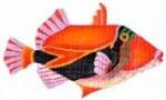 DENISE DeRUSHA DESIGNS DD-12 Triggerfish 11 1/2 x 7 1/2 13 Mesh