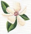 DENISE DeRUSHA DESIGNS DD-116 Magnolia 8 x 9 18 Mesh